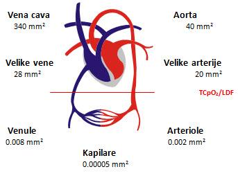«mikrocirkulacija»